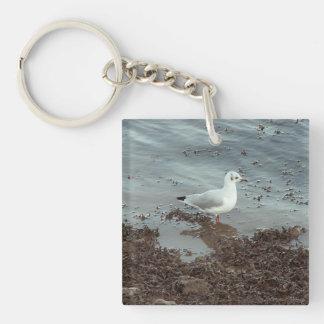Pájaro en el borde del agua Gaviota de cabeza neg Llavero