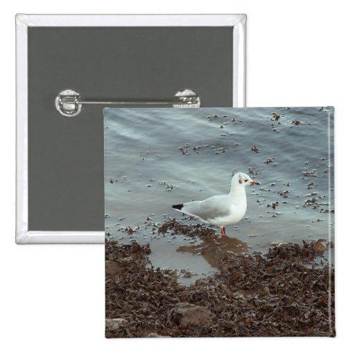 Pájaro en el borde del agua. Gaviota de cabeza neg Pin