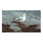 Pájaro en el borde del agua. Gaviota de cabeza neg Tarjetas De Visita