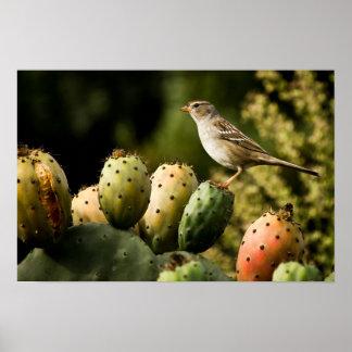 Pájaro en el cactus impresiones