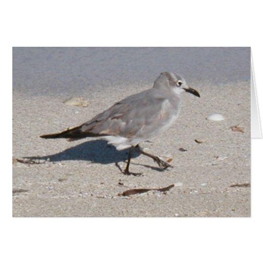 pájaro en el océano tarjeta