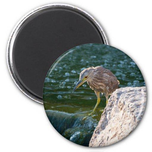 pájaro en imán del agua