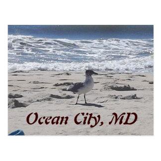 Pájaro en la postal de la playa