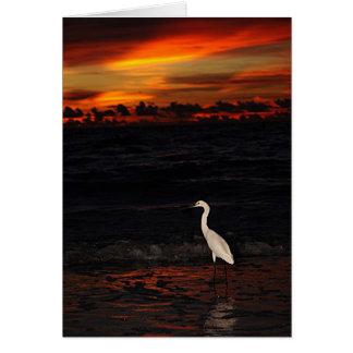 Pájaro en la puesta del sol tarjetón