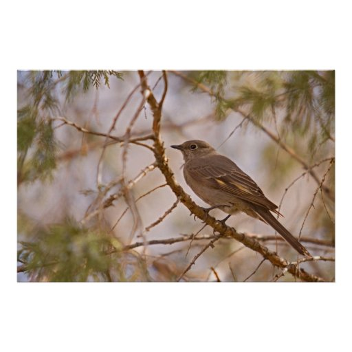 Pájaro en rama póster