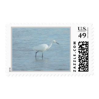 Pájaro en sello del agua