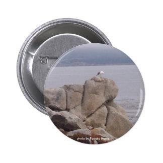Pájaro en un botón de la naturaleza de la roca pin