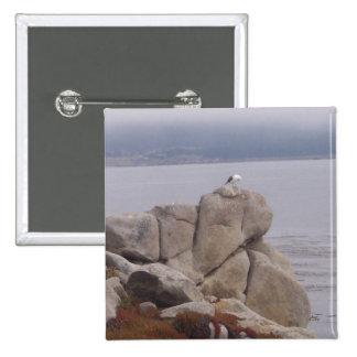 Pájaro en un botón del cuadrado de la roca pins