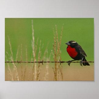 Pájaro en un poster del alambre