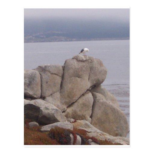 Pájaro en una postal de la roca