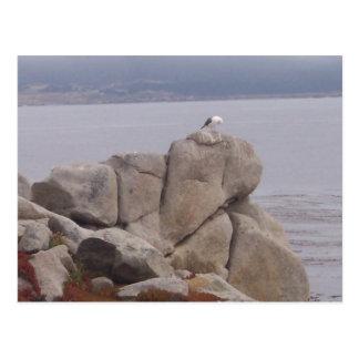 Pájaro en una postal de la roca (visión horizontal