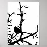 Pájaro en una rama posters