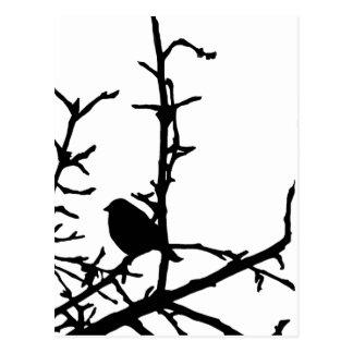 Pájaro en una rama tarjeta postal