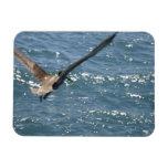 Pájaro en vuelo imanes de vinilo