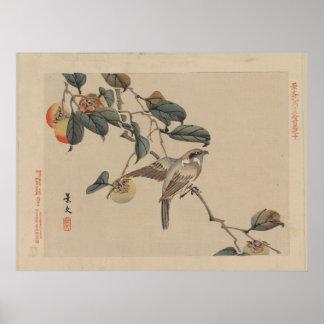Pájaro encaramado en el árbol de caqui - vintage j póster