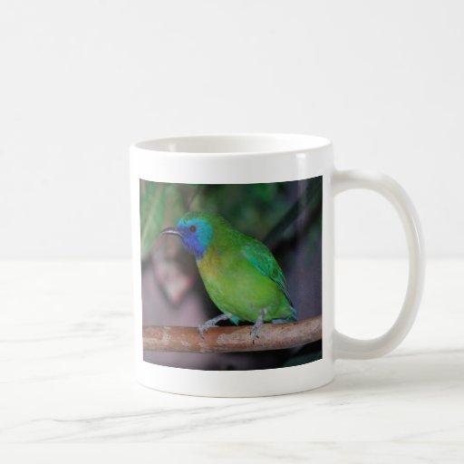 pájaro enmascarado azul de la hoja taza clásica