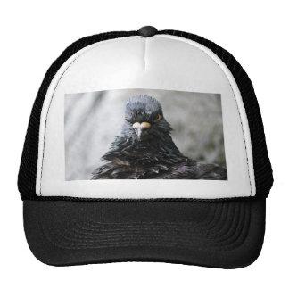 Pájaro enojado gorras