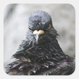 Pájaro enojado pegatina cuadrada
