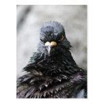 Pájaro enojado postales