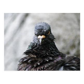 Pájaro enojado tarjetas postales