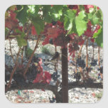 Pájaro entre las uvas en vid en viñedo calcomanías cuadradas personalizadas