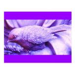 Pájaro estatuario púrpura tarjetas postales