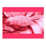 Pájaro estatuario rosado postal