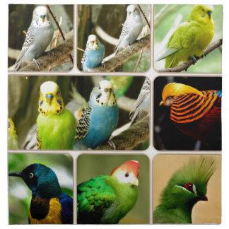 Pájaro exótico Budgie Servilletas Imprimidas