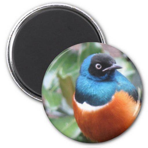 Pájaro exótico hermoso encaramado imán de frigorifico