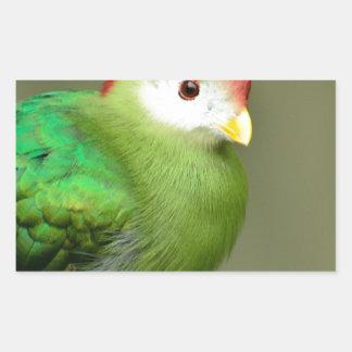 Pájaro exótico rectangular pegatina