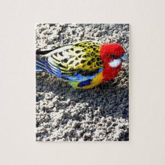 Pájaro exótico puzzles con fotos