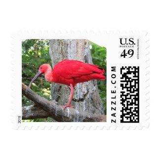 Pájaro exótico rojo del Spoonbill rosado Timbres Postales