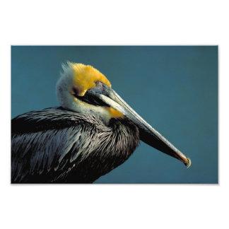 pájaro fotografía