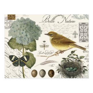 pájaro francés y jerarquía del vintage moderno tarjetas postales