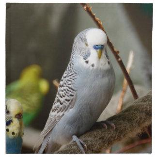 Pájaro gris de Budgie Servilleta De Papel