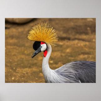 Pájaro gris hermoso de la grúa poster