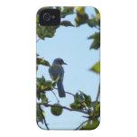 Pájaro hermoso del arrendajo azul iPhone 4 protectores