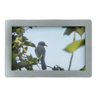 Pájaro hermoso del arrendajo azul hebilla cinturon rectangular