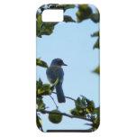 Pájaro hermoso del arrendajo azul iPhone 5 funda