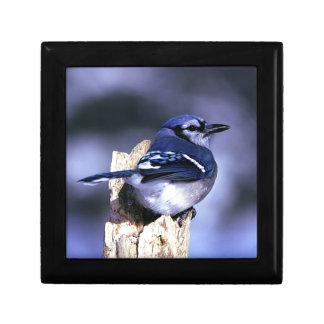 Pájaro hermoso del arrendajo azul joyero cuadrado pequeño