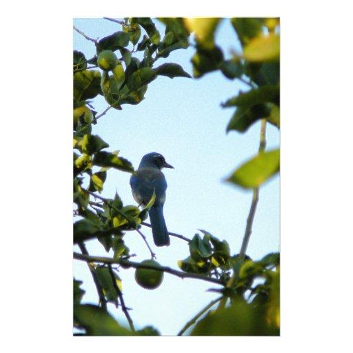 Pájaro hermoso del arrendajo azul papelería