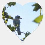 Pájaro hermoso del arrendajo azul colcomanias de corazon personalizadas