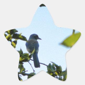 Pájaro hermoso del arrendajo azul pegatina en forma de estrella
