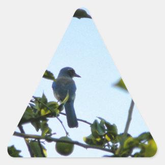 Pájaro hermoso del arrendajo azul pegatina triangular