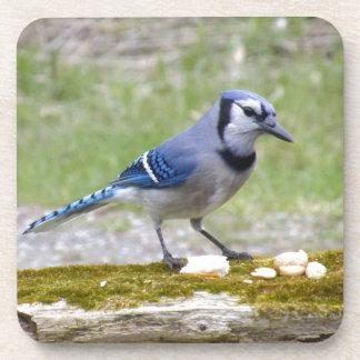 Pájaro hermoso del arrendajo azul posavasos de bebida