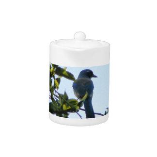 Pájaro hermoso del arrendajo azul