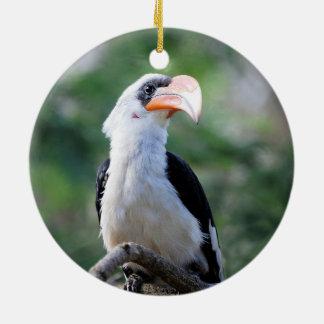 Pájaro hermoso del hornbill adorno redondo de cerámica