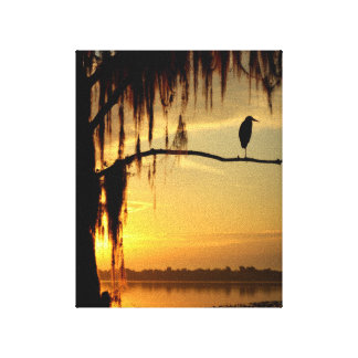 Pájaro hermoso encaramado en árbol sombreado lienzo envuelto para galerias
