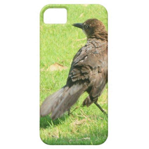 Pájaro iPhone 5 Case-Mate Cárcasa