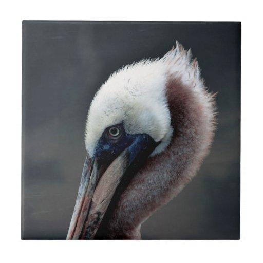 pájaro joven del lado de la opinión de la cabeza d azulejos